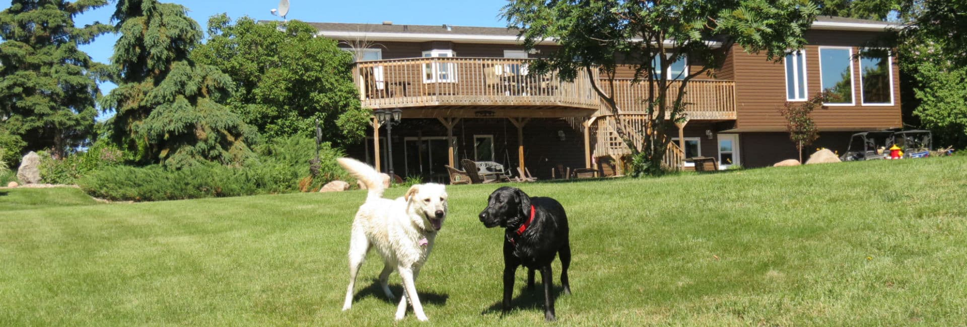 <h2>HECK OF A DOG HOME</h2><p>Where Pets are people too!</p><a title='Read more about our services' href='http://heckofadoghome.com/our-services/'>Read about our services</a>